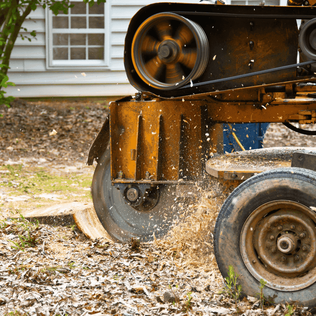 Picture of stump grinding in Decatur Illinois