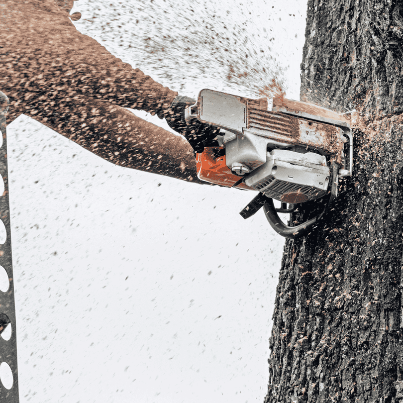 Picture of a tree trunk being cut in half by chainsaw